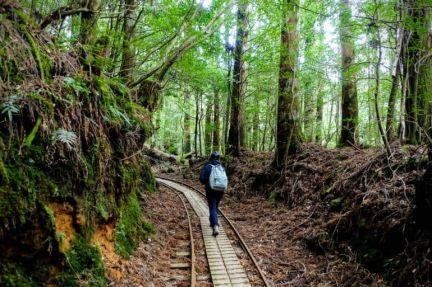 Yakushima-Jomonsugi-Anbo-Trail-770x513